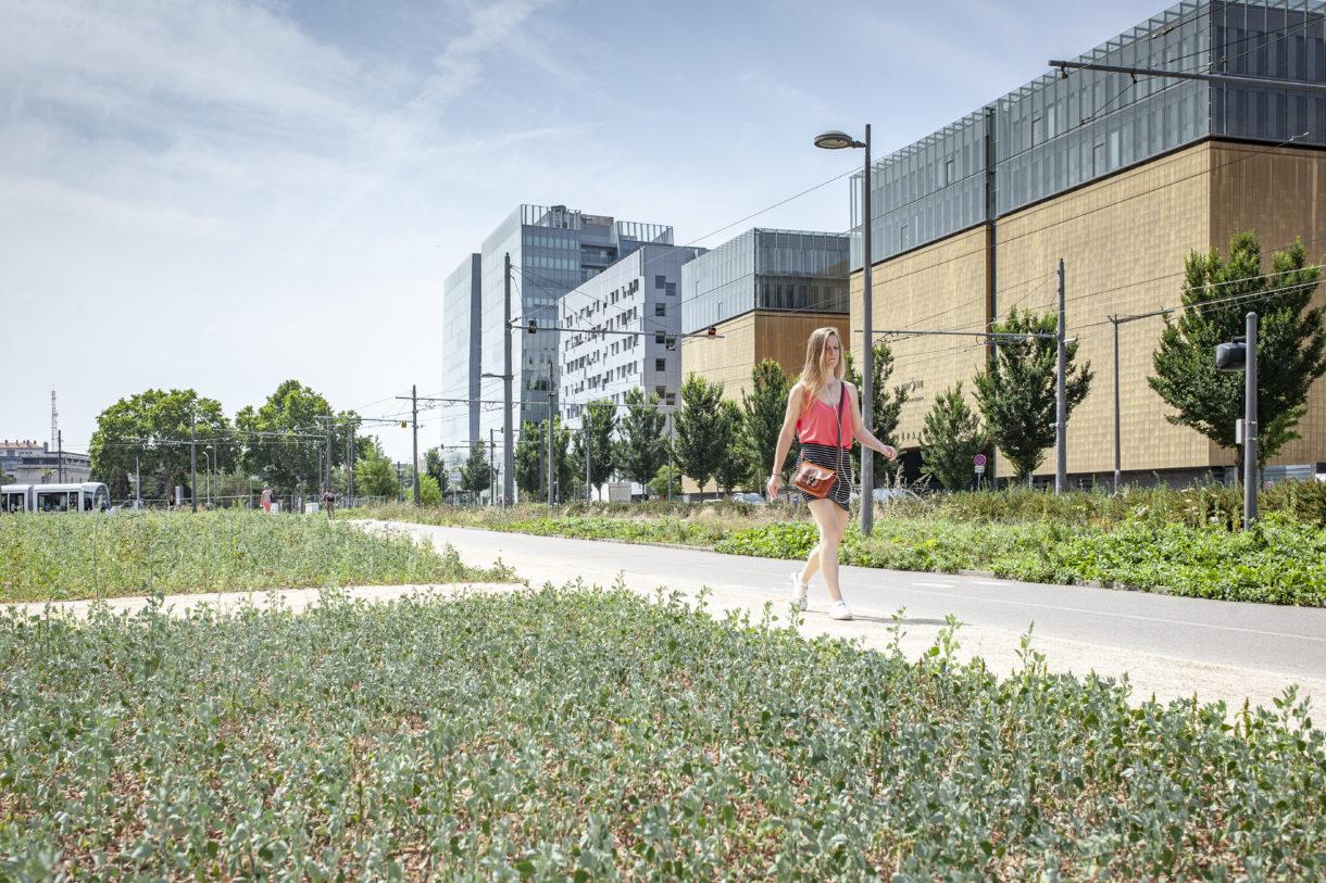 Nouvelle Rue Flqndin, Réaménagement Et Plantation D'une Prairie Fleurie.